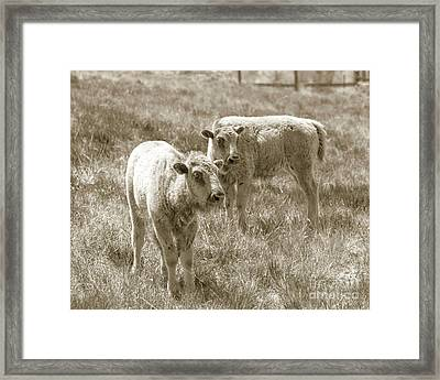 Framed Print featuring the photograph Pair Of Baby Buffalos by Rebecca Margraf