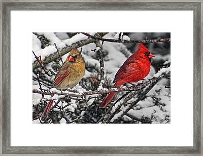 Pair Of Cardinals In Winter Framed Print