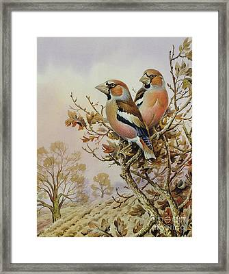 Pair Of Chaffinches Framed Print by Carl Donner
