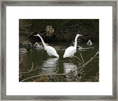 Framed Print featuring the photograph Pair Of Egrets by George Randy Bass
