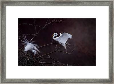Pair Of Egrets Framed Print