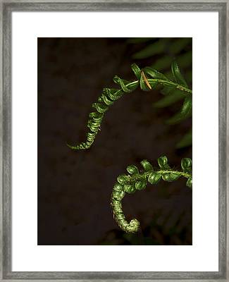 Pair Of Ferns Framed Print by Jean Noren