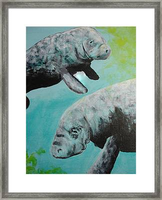 Pair Of Florida Manatees Framed Print by Susan Kubes