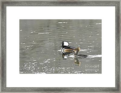 Framed Print featuring the photograph Pair Of Hooded Mergansers by Larry Ricker