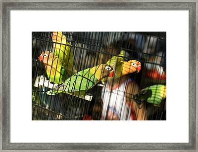 Pair Of Keets Framed Print by Carl Purcell