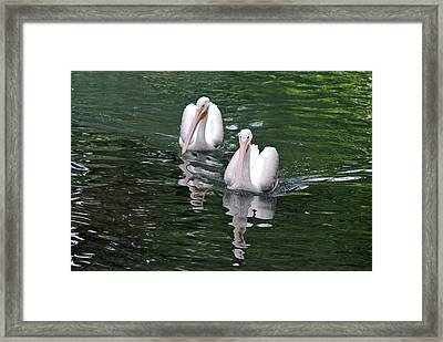 Pair Of Pelicans Framed Print by Teresa Blanton