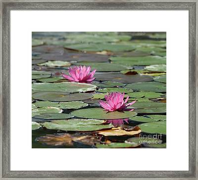Pair Of Pink Pond Lilies Framed Print
