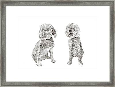 Pair Of Pretty Poodles Pups Framed Print