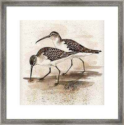Pair Of Sandpipers Framed Print