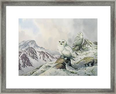 Pair Of Snowy Owls In The Snowy Mountains, Australia Framed Print by Carl Donner