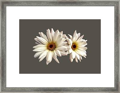 Pair Of White Daisies Framed Print