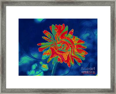 Paisley Gerber Framed Print