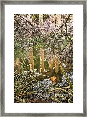 Palace Grounds 2007 Framed Print
