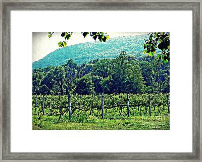 Palaia Vineyard Framed Print by Sarah Loft