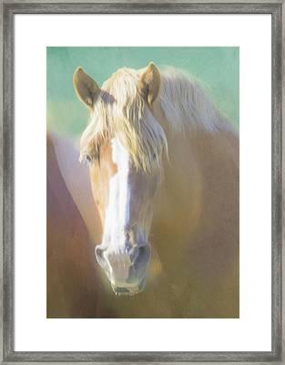 Palamino Portrait Framed Print by Hal Halli