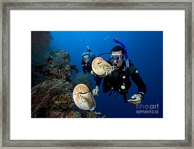 Palau Underwater Framed Print by Dave Fleetham - Printscapes
