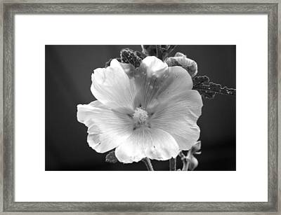 Pale Beauty Framed Print by Tina M Wenger