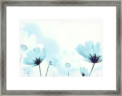 Cosmos Flowers Framed Print by BONB Creative