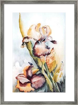 Pale Iris Framed Print