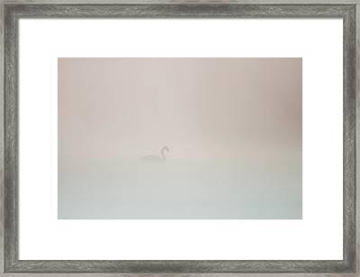 Pale Outline In The Fog Framed Print