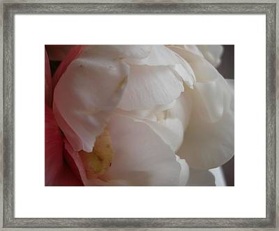 Pale Peonie Framed Print by Grace Matthews