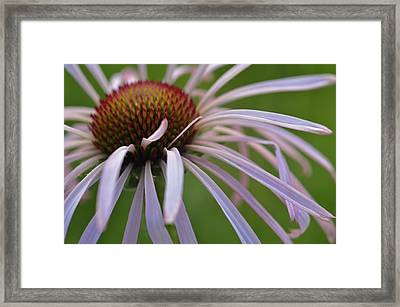 Pale Petals Framed Print
