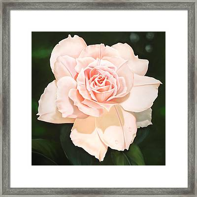 Pale Pink Rose Framed Print by Ora Sorensen