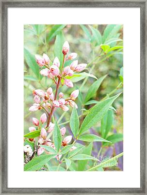 Pale Powder Pink Plant Framed Print