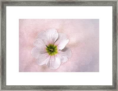 Pale Primrose Framed Print