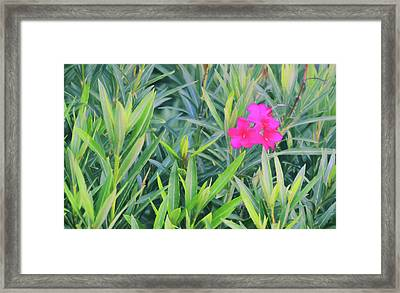 Pale Red Blooms Framed Print by JAMART Photography