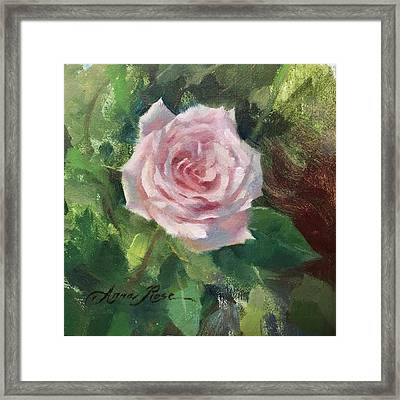 Pale Rose Study Framed Print