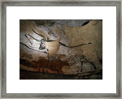 Paleolithic Art Of Bulls On Calcite Framed Print by Keenpress