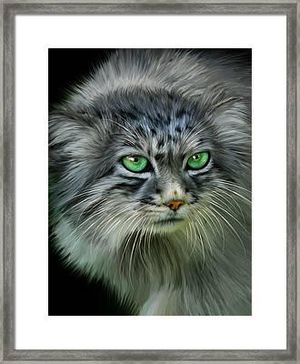 Pallas Cat Framed Print by Julie L Hoddinott