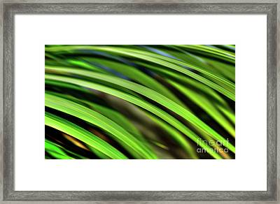 Framed Print featuring the photograph Palm Abstract By Kaye Menner by Kaye Menner