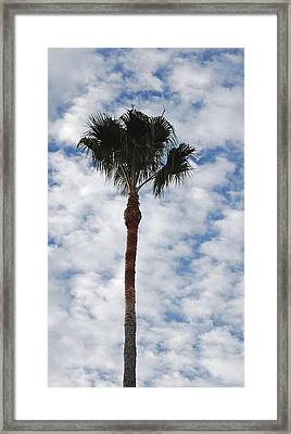 Palm And Clouds Framed Print by Jean Booth
