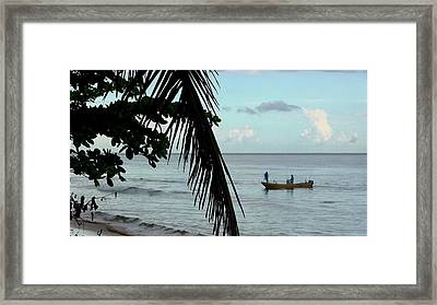 Palm And Tree Framed Print