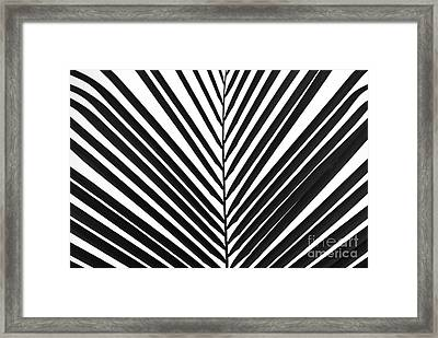 Palm Art Framed Print
