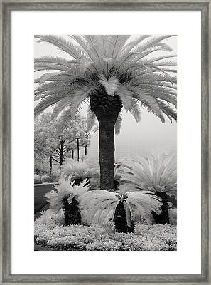 Palm At Gulf Shores Framed Print by Fred Baird