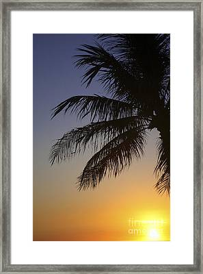 Palm At Sunset Framed Print by Brandon Tabiolo - Printscapes
