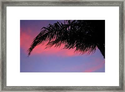 Palm At Sunset Framed Print