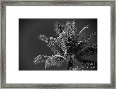 Palm Beauty Monochrome Lahaina Framed Print by Sharon Mau