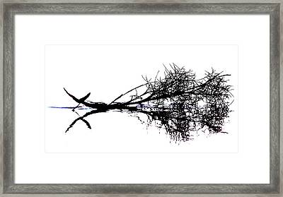 Palm Branch At The Beach Framed Print
