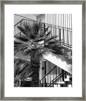 Palm Chevron Palm Springs Framed Print by William Dey