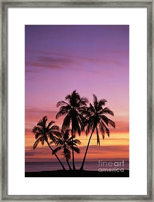 Palm Cluster Framed Print by Allan Seiden - Printscapes