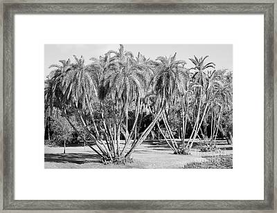 Palm Clusters, Lighter Black And White Framed Print by Liesl Walsh