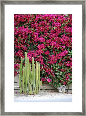 Palm Desert Blooms Framed Print