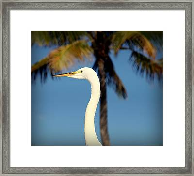 Palm Egret Framed Print