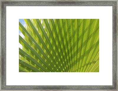 Palm Fingers Framed Print by Dallas Hyatt