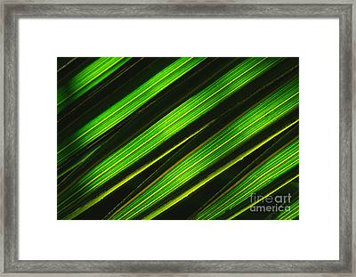 Palm Frond Abstract Framed Print by Sandra Bronstein