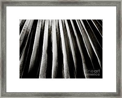 Palm Frond Framed Print by Charmian Vistaunet